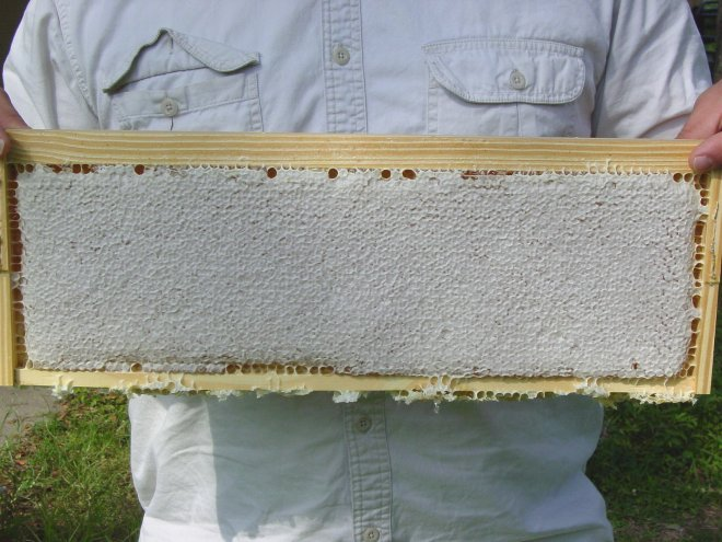 capped_honeycomb_frame